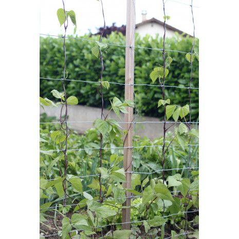 Support A Rames Pour Plantes Grimpantes Planter Des Arbres Plante Grimpante Et Jardin Potager