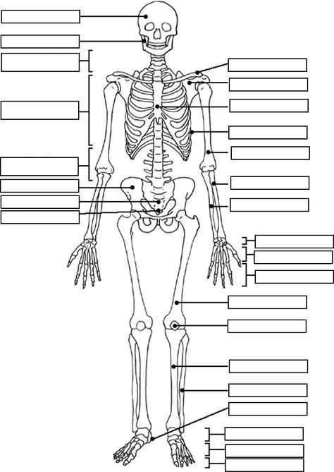 Skeleton Label Worksheet With Answer Key A Amp P Pinterest
