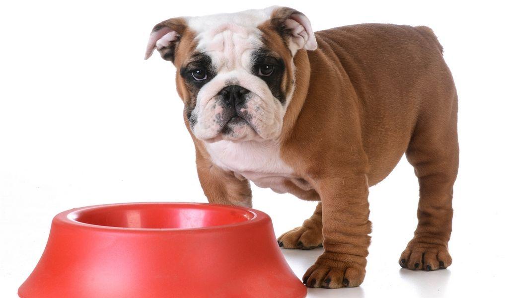 Best dog food for english bulldogs 6 vet