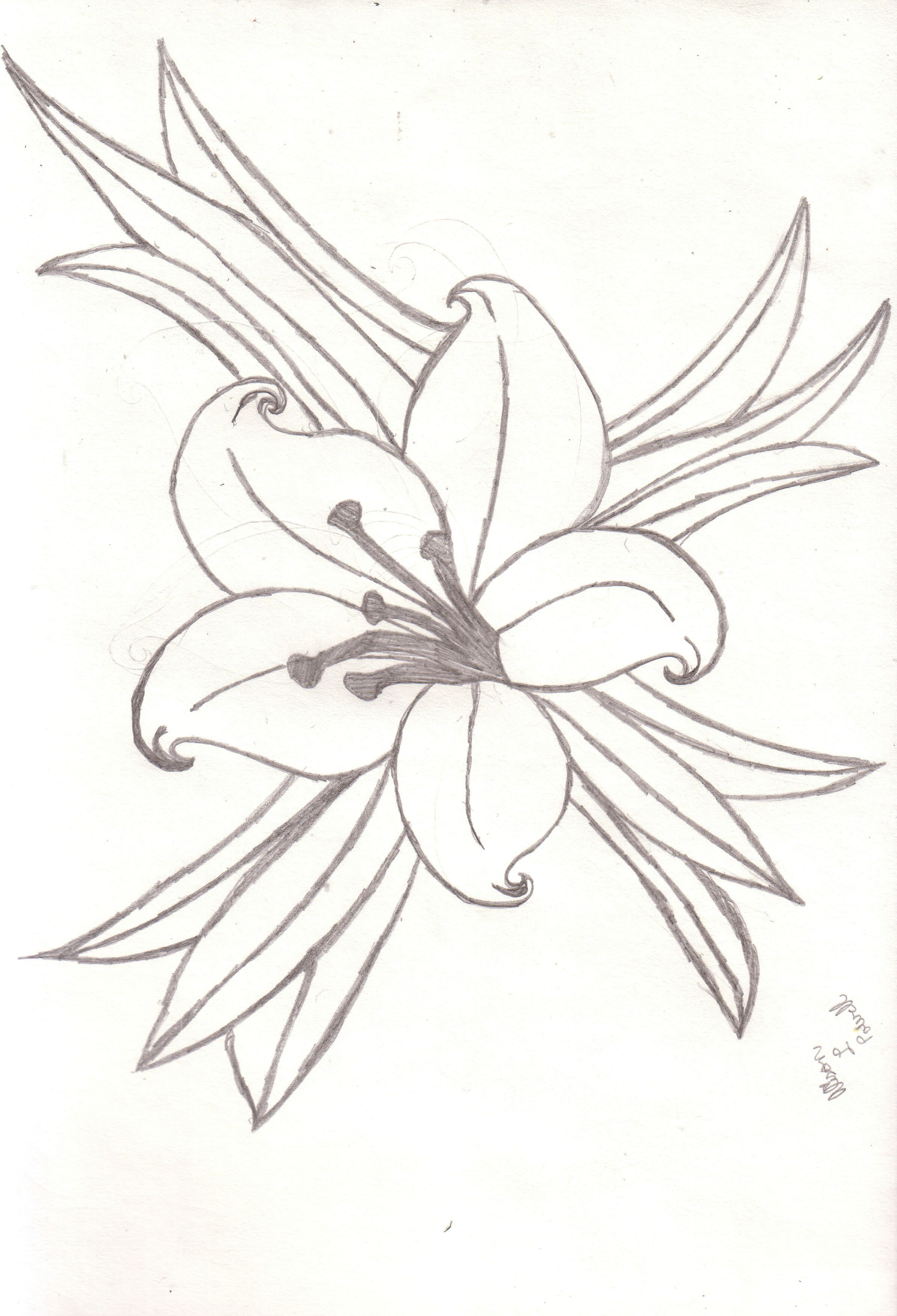 Uncategorized Drawing Of Lily lily drawing google search flower images pinterest search