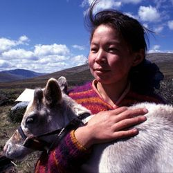 "Only 44 Dukha families remain, appx. 200- 400 people. They ride, breed, milk, and live off reindeer - populations dropped to appx 600 since the '70s (estimated then 2000) Since the democratization of Mongolia, no gov. programs are in place to replenish reindeer herds, direly endangering the Dukha way of life. Much of the Dukha income today comes from tourists who buy their crafts and to ride their domesticated reindeer. The name ""tsaatan"" means ""reindeer herder"" as in ""tsaa bug"" (reindeer)."