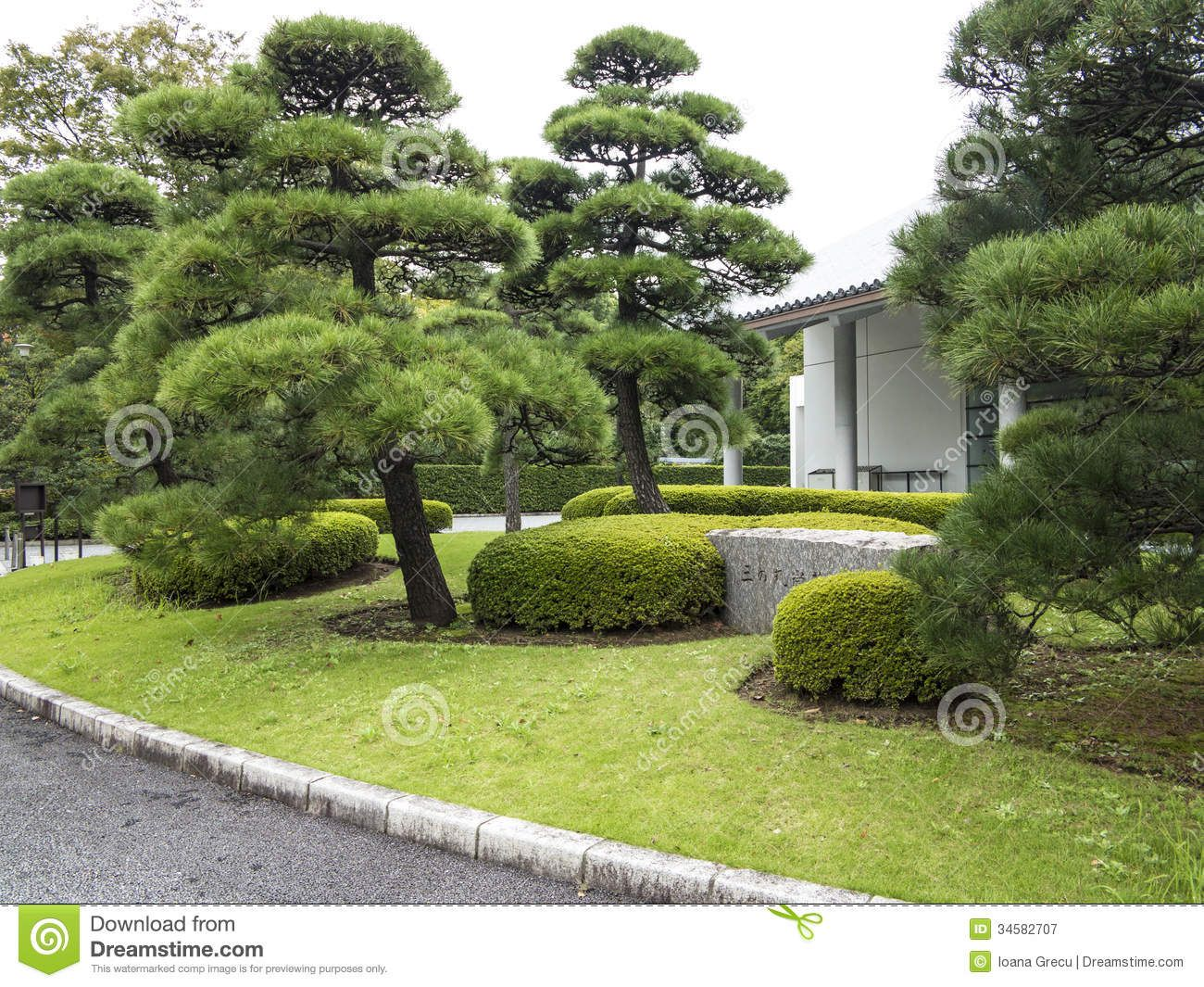Japanese Pine Stock Photography   Image: 33612