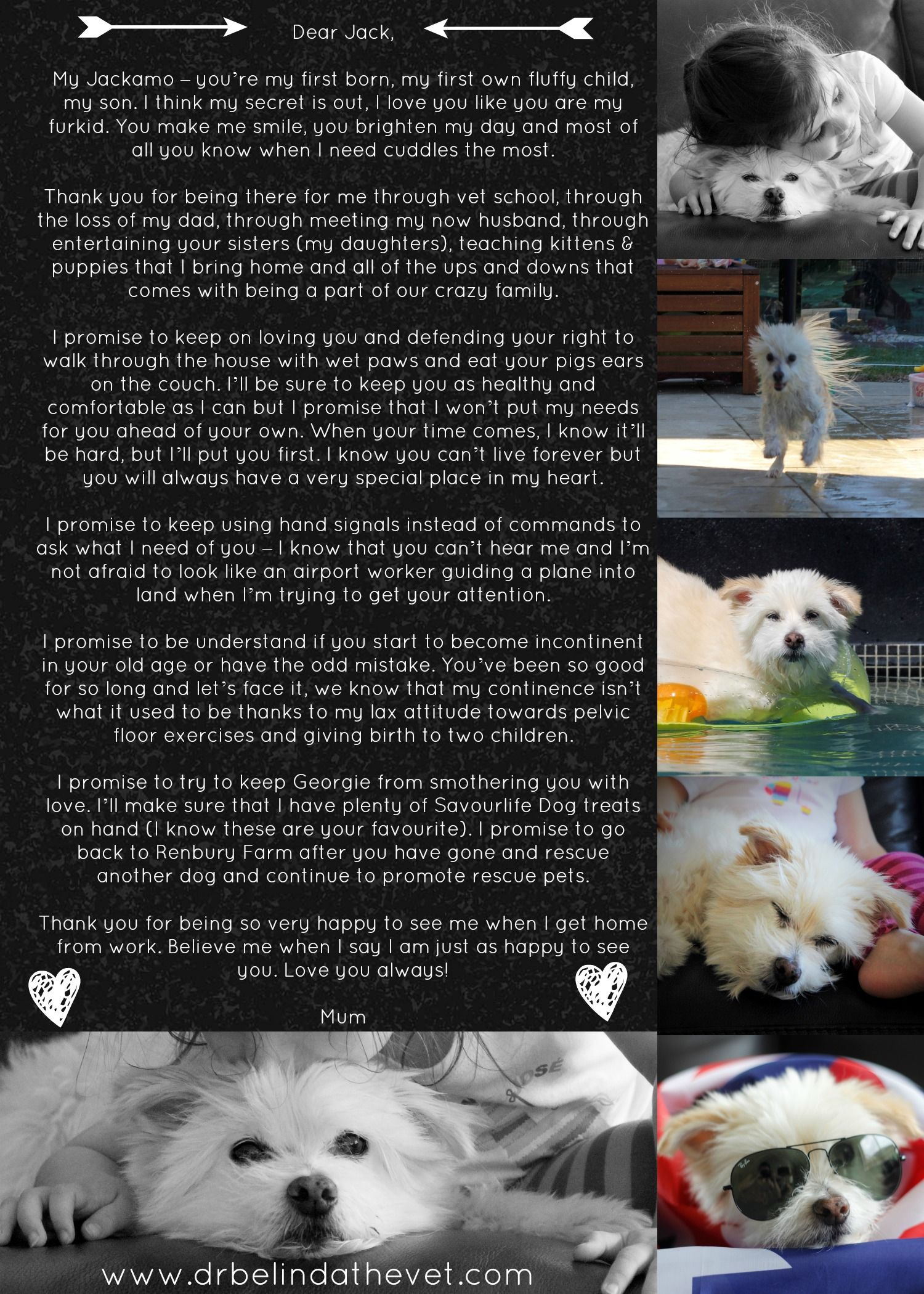 Love Your Pet Day An Open Letter To Jack Dr Belinda The Vet Love Your Pet Day Pet Day Dog Quotes