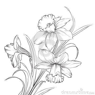 Pin By Jovita Cerniauskaitė On Dessins In 2020 Flower Drawing Daffodil Tattoo Narcissus Flower Tattoos
