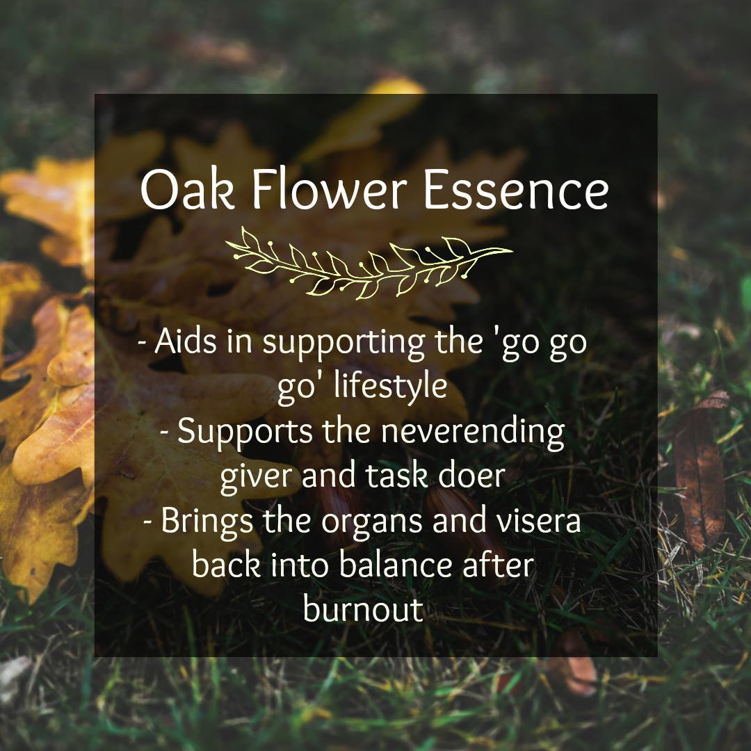 Oak Flower Essence — Enchanted Living Spaces Bianca