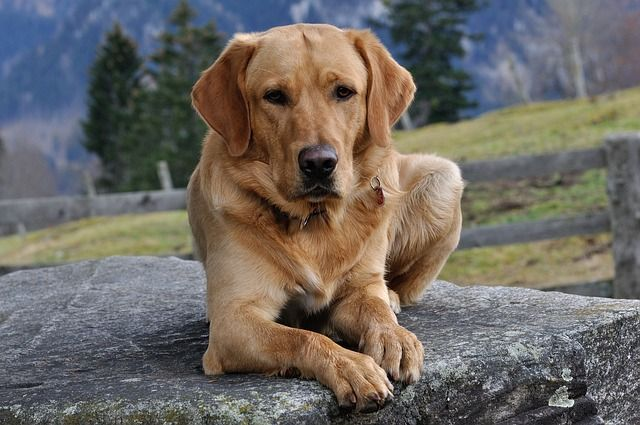 5 Amazing Things Dogs Can Sense About Humans Dogs Cute Dogs