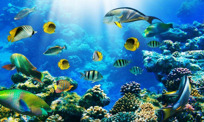 Caribbean Reefs Are Eroding Ocean Wallpaper Removable Wall Murals Wall Murals