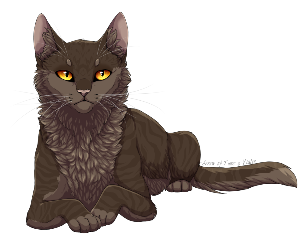 Finally a pic of mousefur a thunderclan warrior she cat that had no beautiful cats buycottarizona Gallery