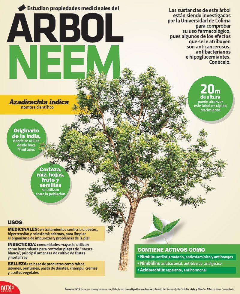 el aceite de neem beneficia a la diabetes