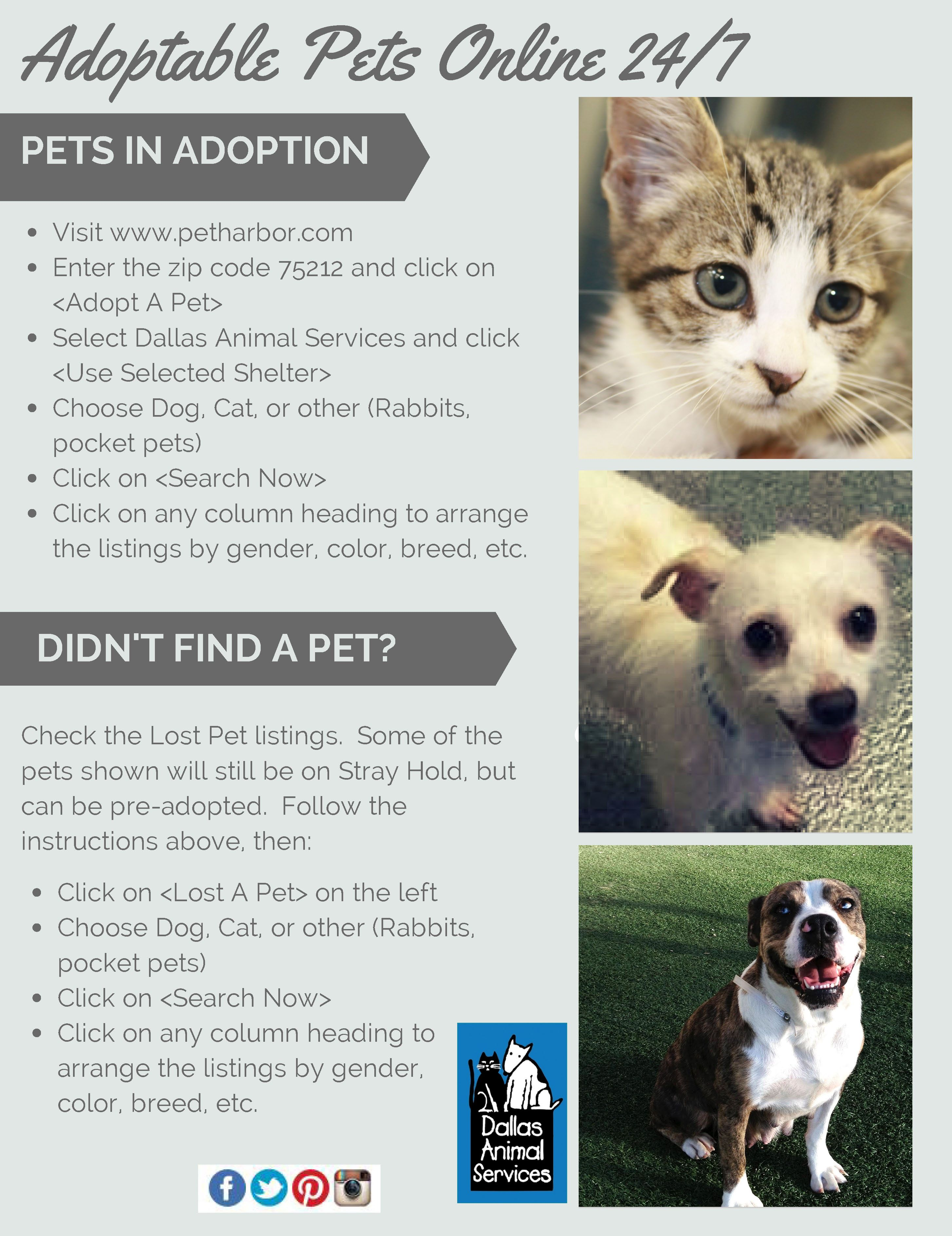 The Dallas Animal Shelter is the best place to find your