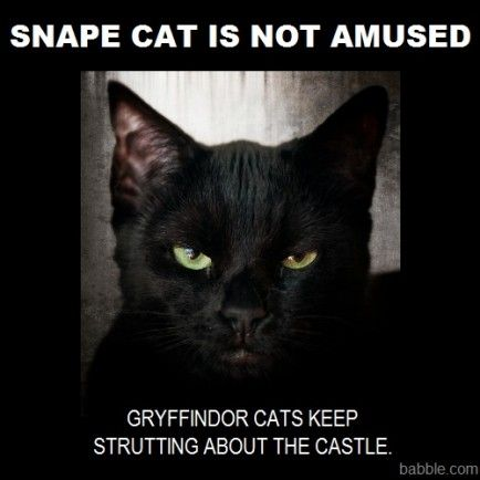 Disney Family Recipes Crafts And Activities Harry Potter Characters Harry Potter Cat Harry Potter Funny