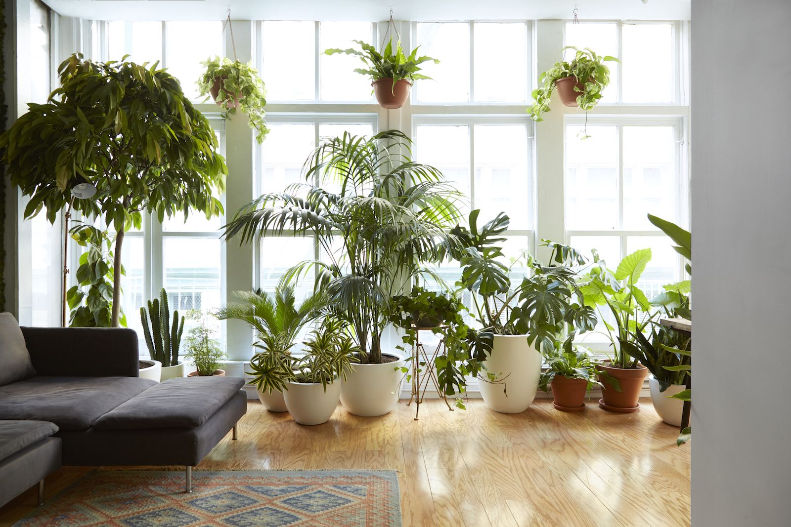 7 Gorgeous Houseplants That Will Purify The Air And Make