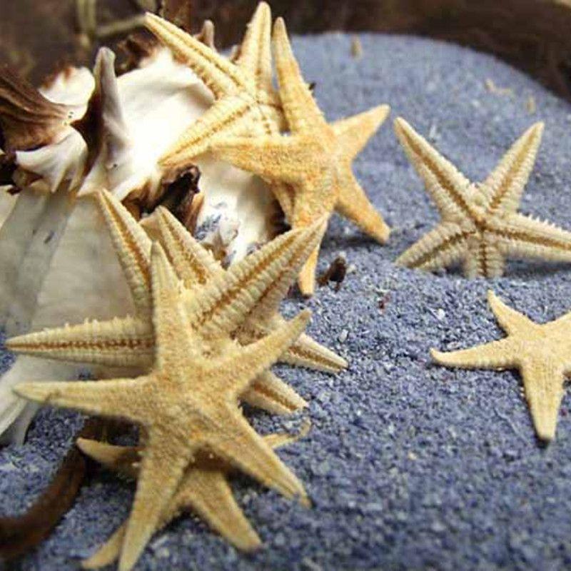 20 Stks Partijen Natuurlijke Ambachten Wit Zeester Zee Ster Bloemen En Geschenken Decoratie Kroonslakshells Specia Mediterraanse Stijl Strand Ambachten Zeester