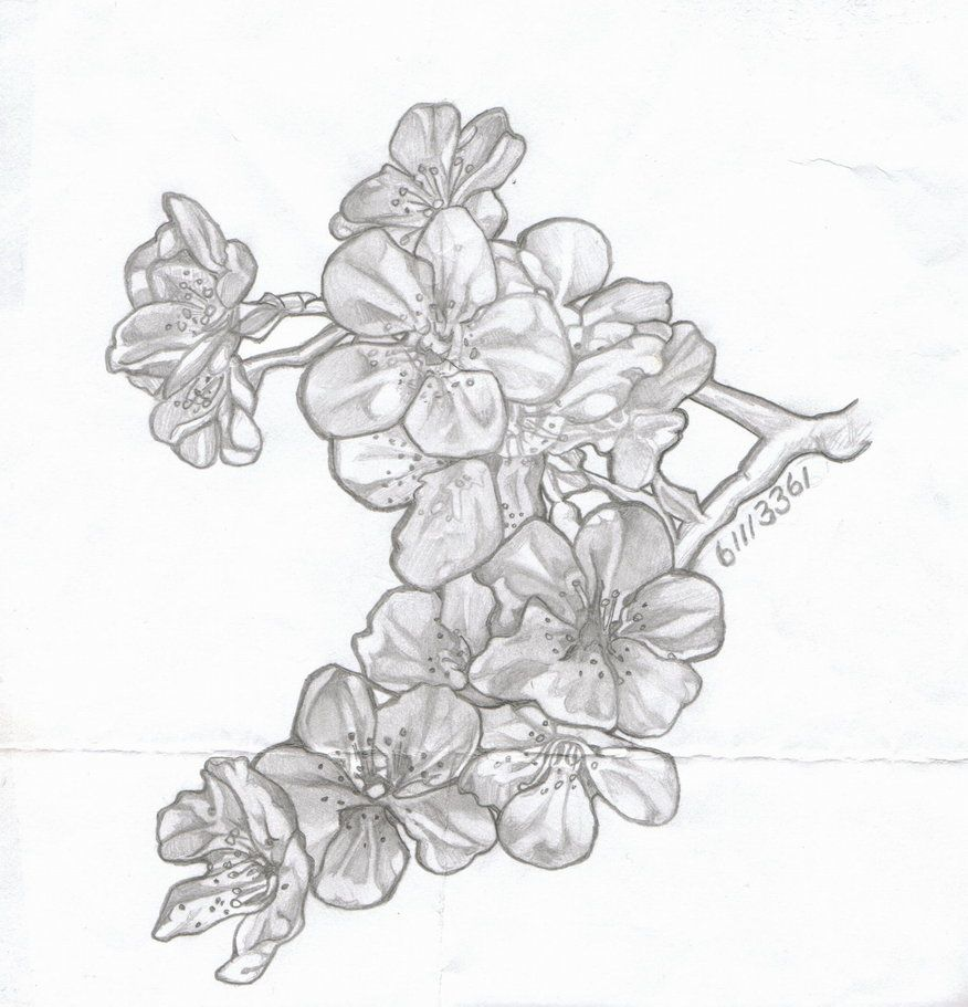 cherry blossom drawings free - Google zoeken | Painting practice ...