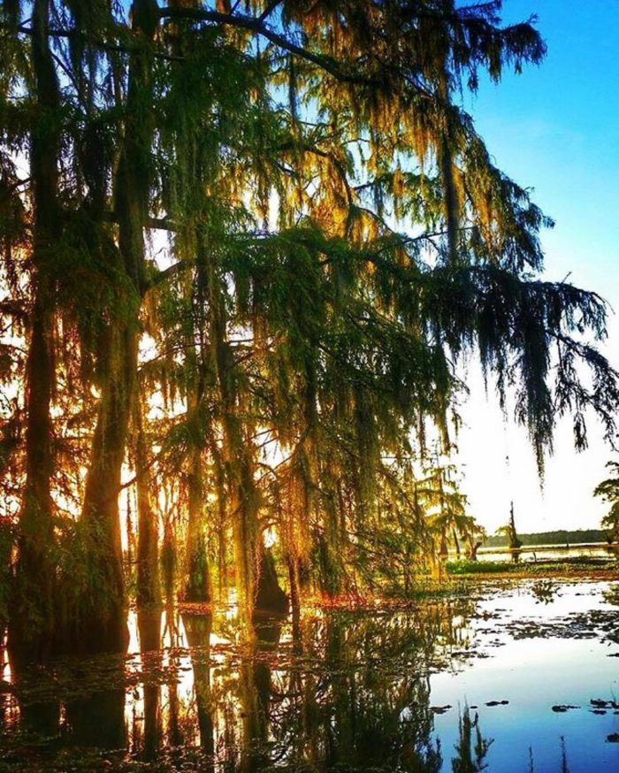 Travel   Louisiana   Exploring   State Pride   Southern   Hidden Gems   Local Finds