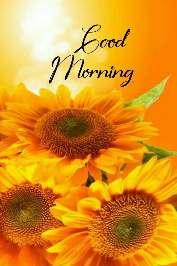 Good morning beautiful pictures in 2020 | Good morning ...