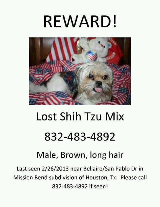 Lost dog! Lost dogs Pinterest Dog, Animal and Adoption - lost dog flyer examples