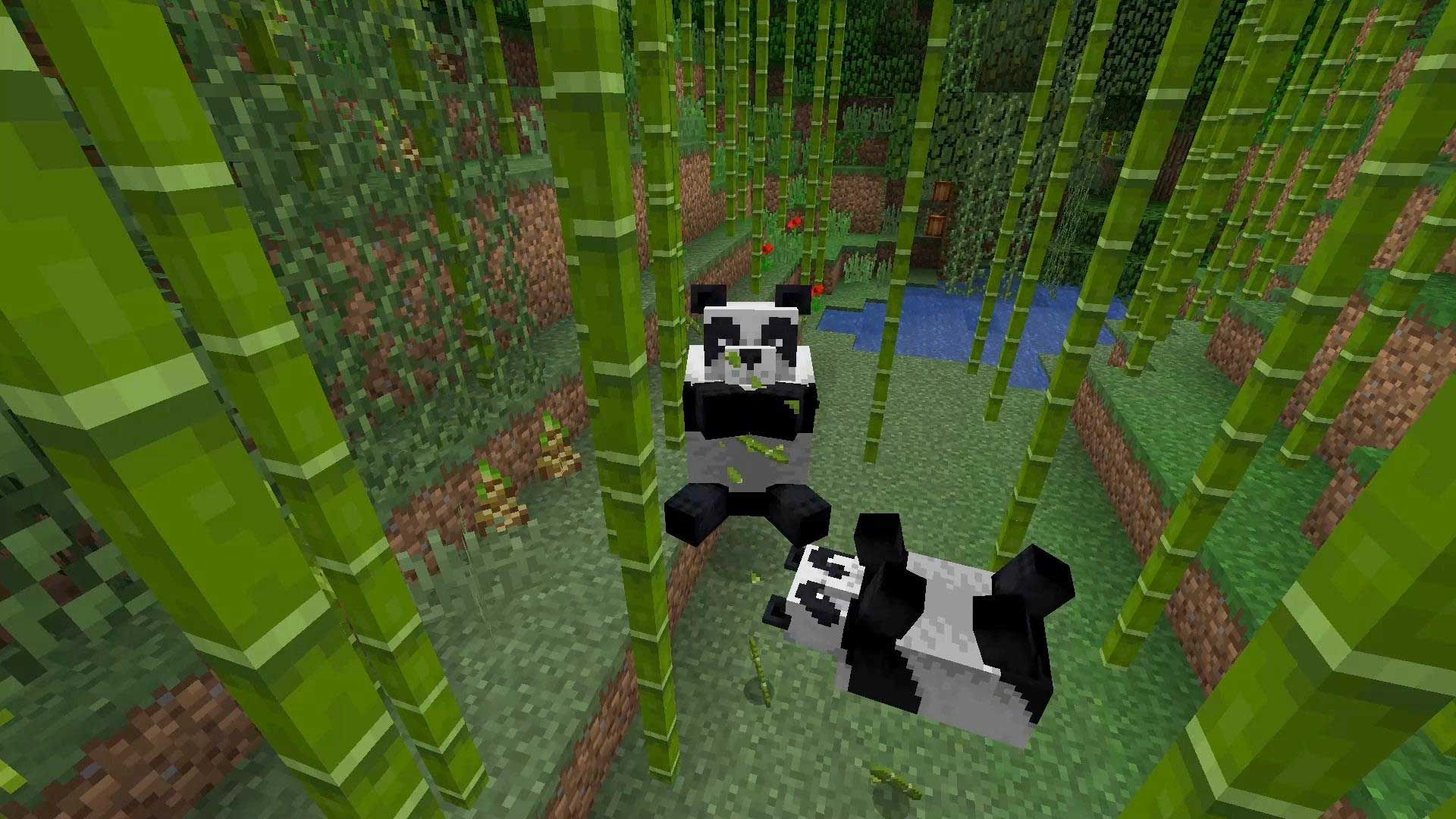 Finding bamboo in Minecraft Bedrock, growing it and then using it