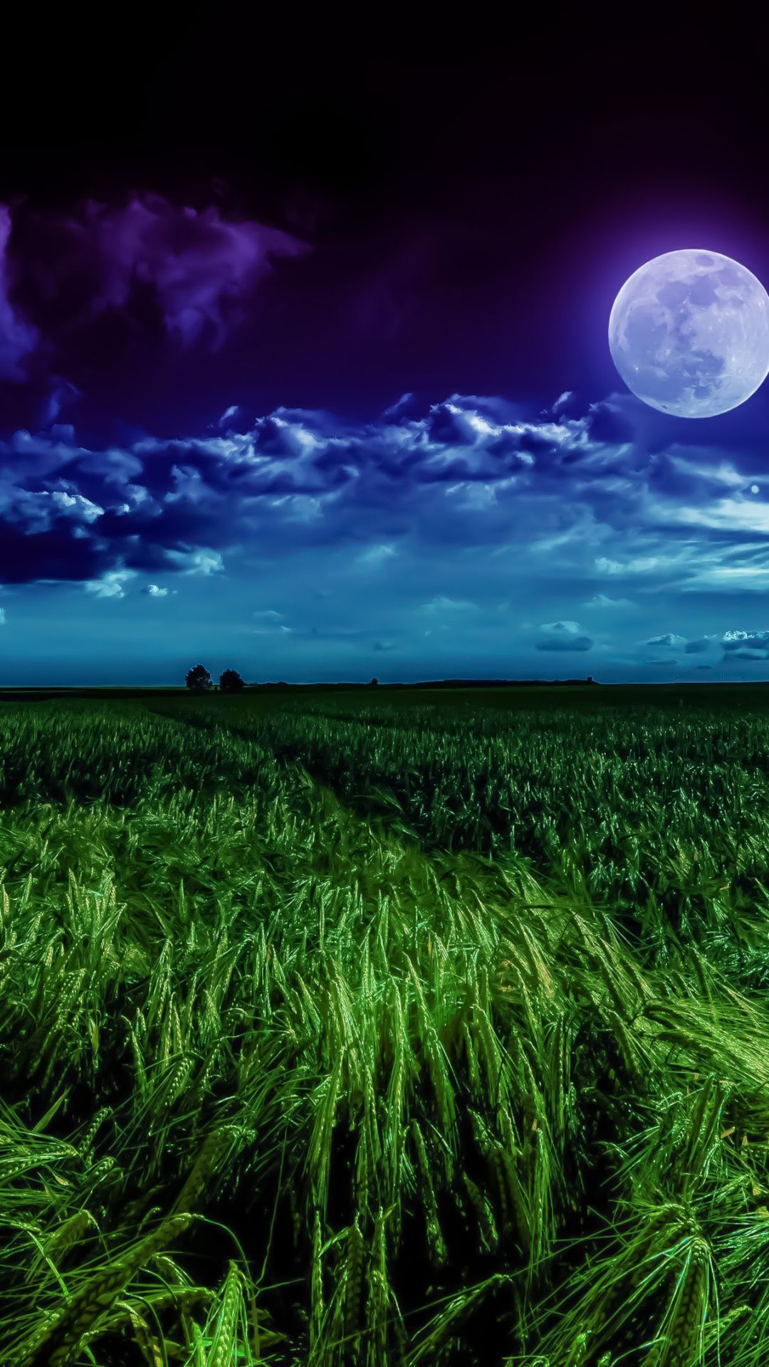 night  clouds  grass field  full moon wallpaper