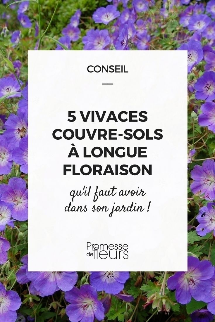 5 vivaces couvre sols longue floraison qu 39 il faut avoir jardin pinterest vivaces couvre. Black Bedroom Furniture Sets. Home Design Ideas
