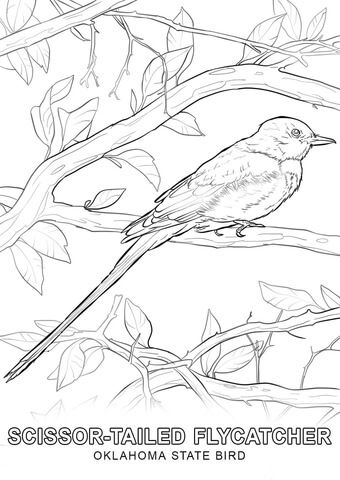 Oklahoma State Bird Coloring Page From Oklahoma Category Select