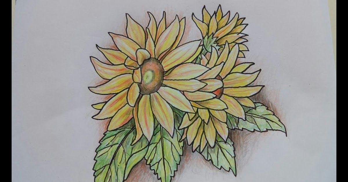 28 Gambar Bunga Mudah Dengan Pensil Cara Mudah Menggambar Bunga Matahari Dengan Pensil Warna Download Lukisan Bunga Ro Gambar Bunga Mudah Gambar Bunga Bunga