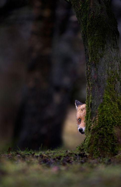little face peeking out