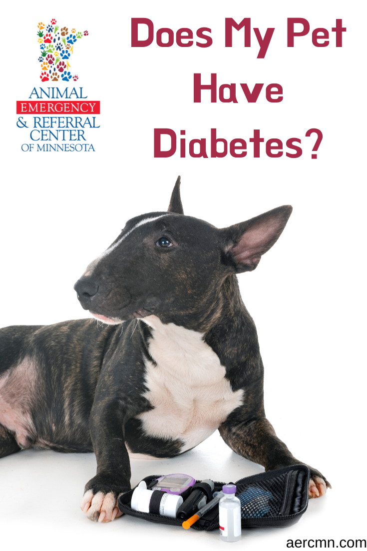 Does My Pet Have Diabetes Pet Health Pets My Animal