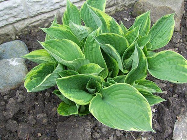 plantas y flores que crecen bien en la sombra