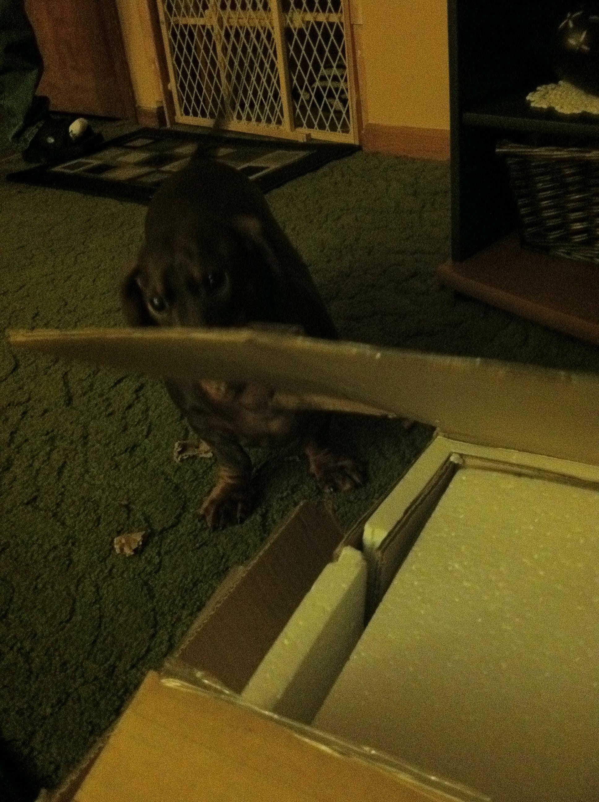 Helping Unpack New Desk!!