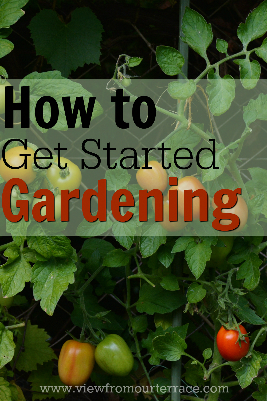 Indoor Gardening Tips You Will Love Gardening for beginners
