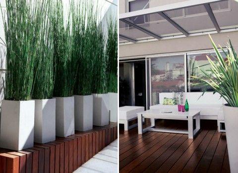 Jardines interiores modernos con palmeras arbustos rosas for Decoracion de jardines con piedras y madera