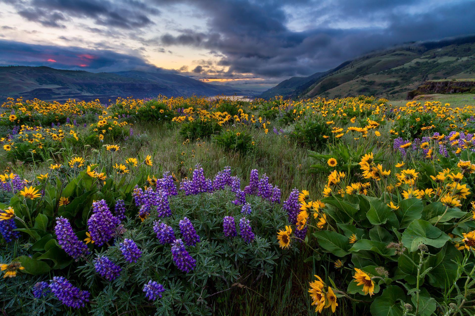Latest Work Rowena Spring Sunrise Landscape Photography Landscape Photography Spring Landscape Photography Landscape Photography Nature