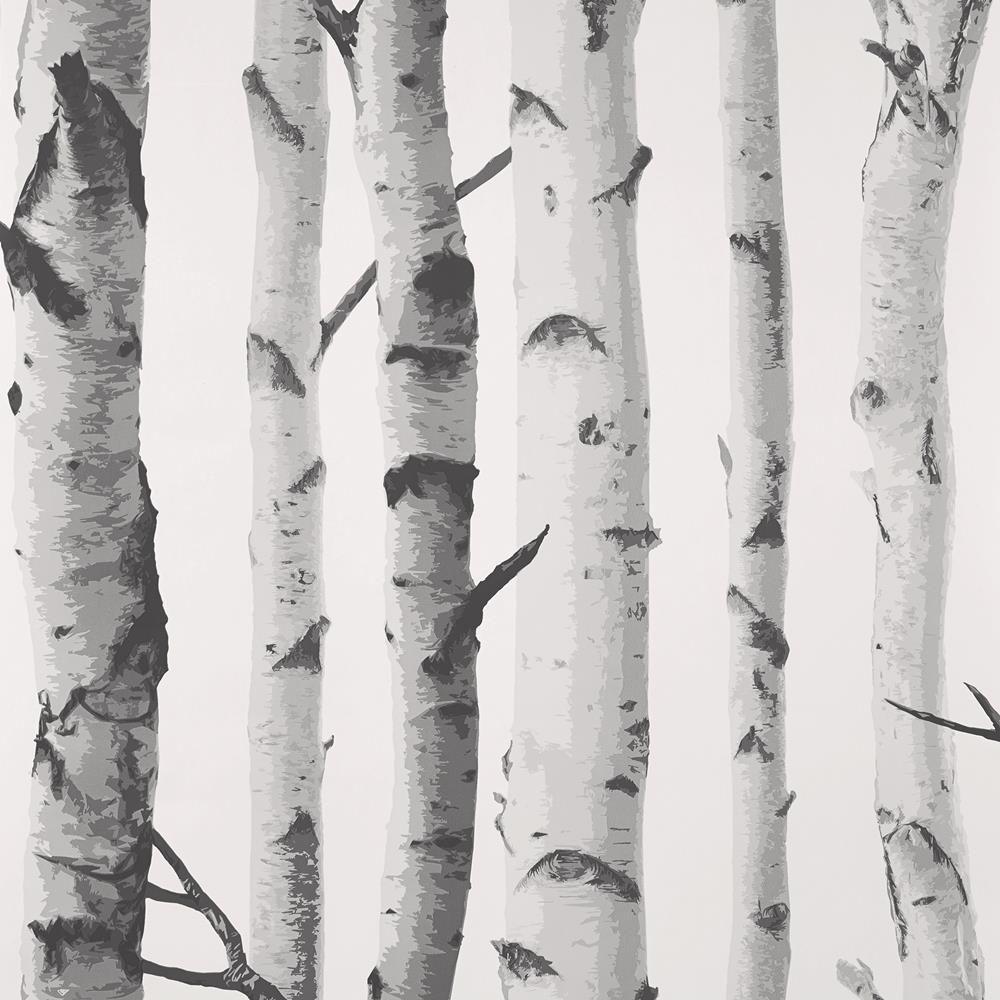 Birch tree nursery decor birch tree wallpaper birch and for Birch trees wallpaper mural