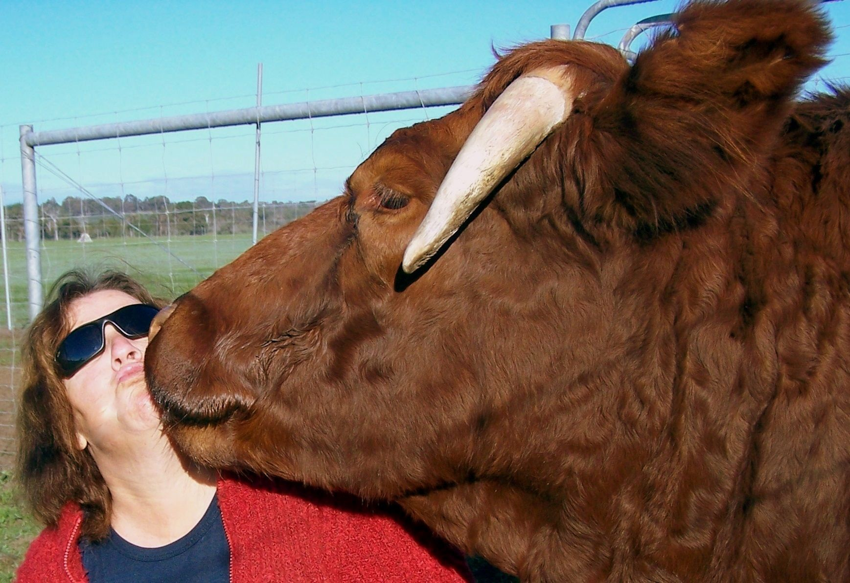 Whos a big Cow now