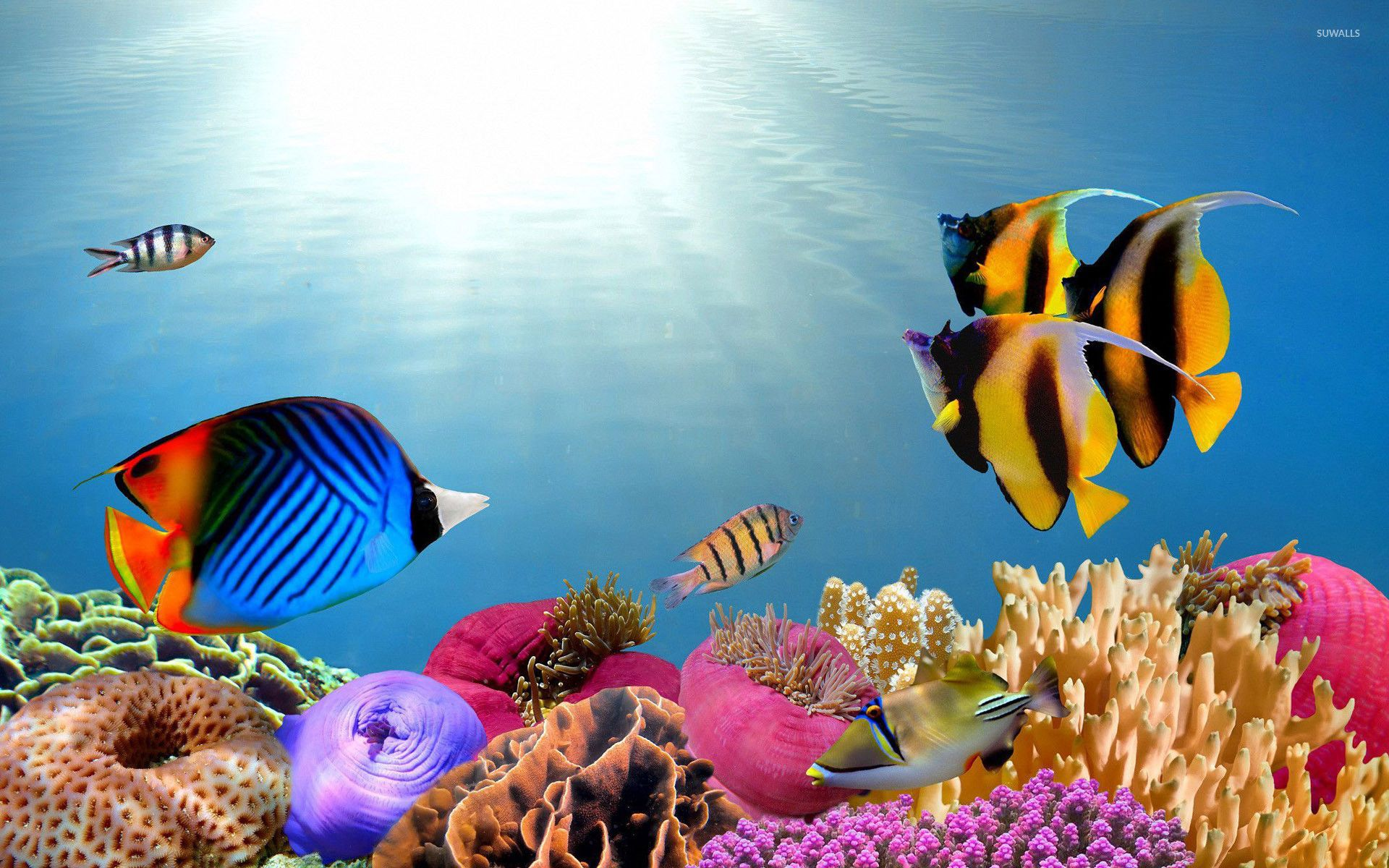 Tropical Fish Wallpapers 48 Best Free Tropical Fish Hd Wallpaper For Iphone Check More At Https Thepho In 2020 Tropical Fish Pictures Fish Wallpaper Tropical Animals
