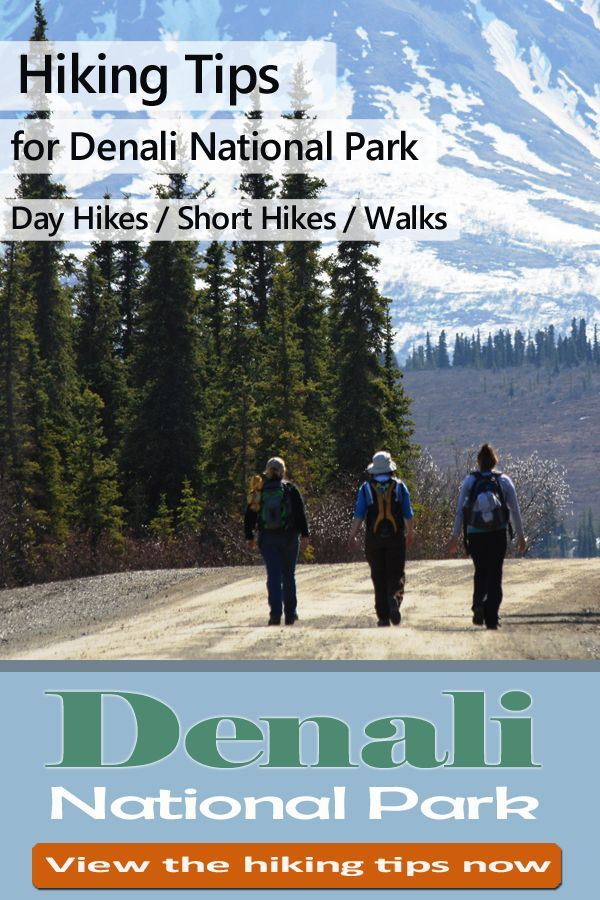 Photo of Denali National Park: Top Tips Before You Go
