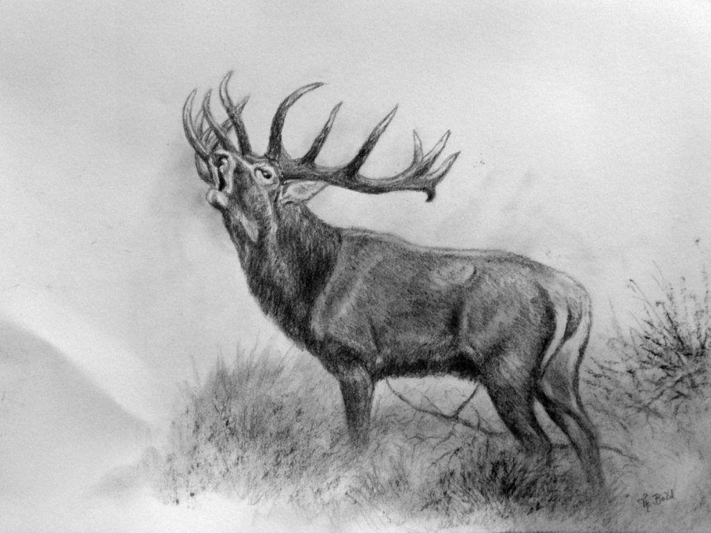Pin By Zbigniew Ziaja On Animal Planet Fine Art In 2020 Deer Drawing Hunting Art Deer Hunting Tattoos