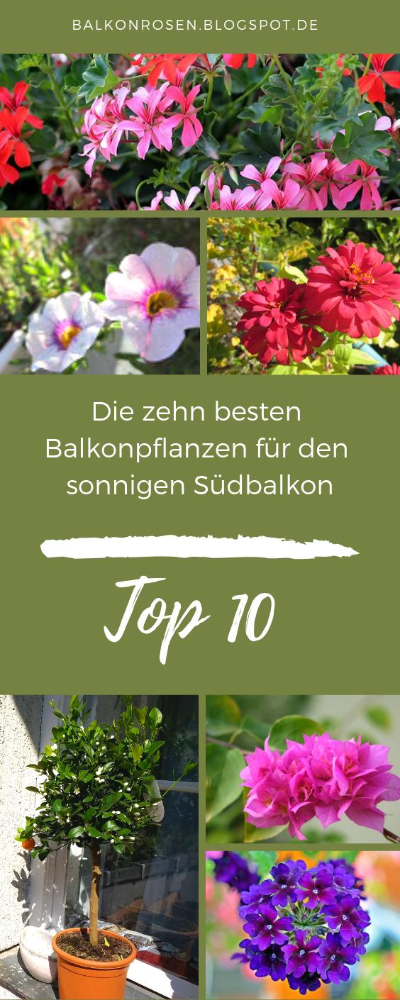 10 Pflegeleichte Balkonpflanzen Fur Die Sonne Balkonrosen Blog Balkon Pflanzen Pflegeleicht Balkon Pflanzen Balkonkasten Bepflanzen