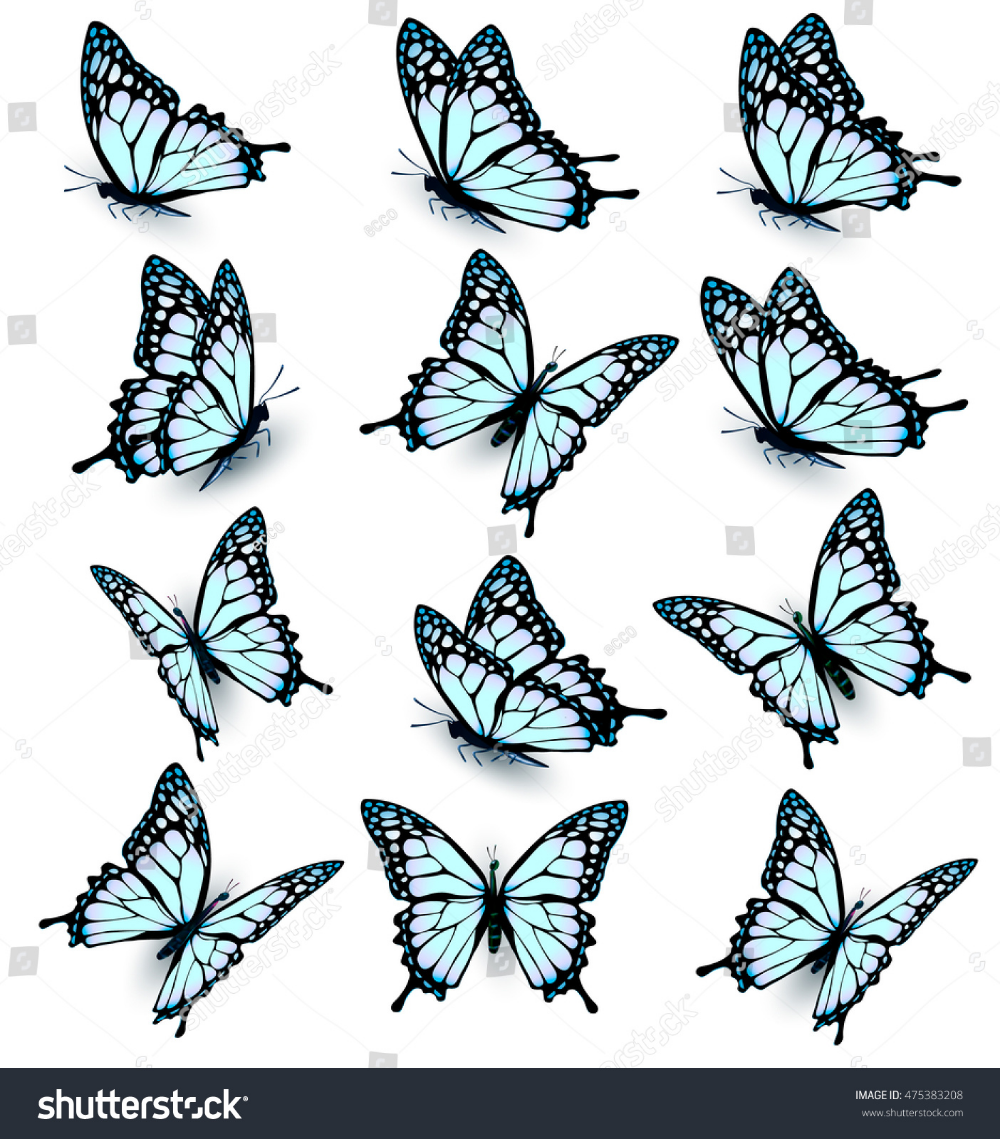 Photo of Collection Blue Butterflies Flying Different Directions Stock Vector (Royalty Free) 475383208