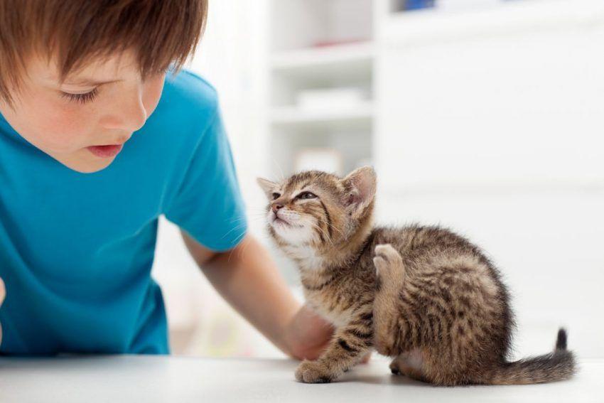 varicoză animale