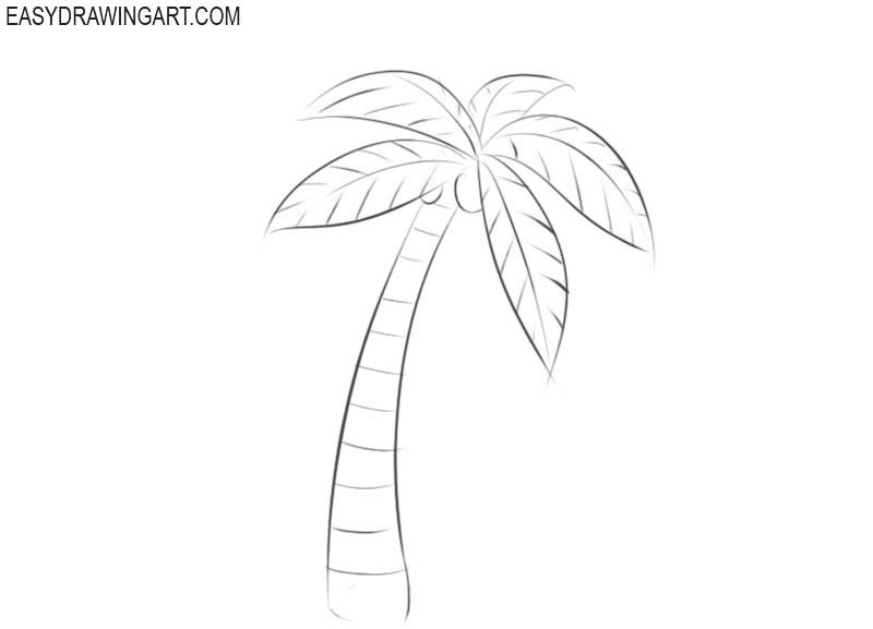 How To Draw A Palm Tree Palm Tree Drawing Palm Tree Drawing Easy Palm Tree Sketch