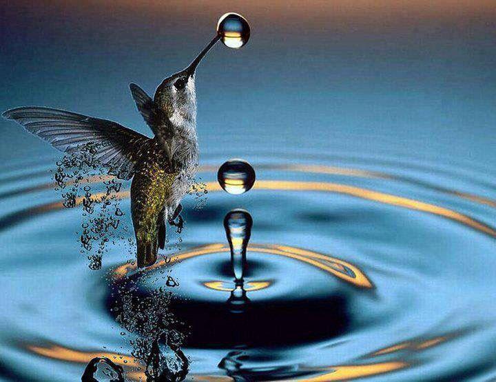 Hummingbird And Water Drop Great Capturing Of This Split Second Moment Krafttier Bilder Tiere