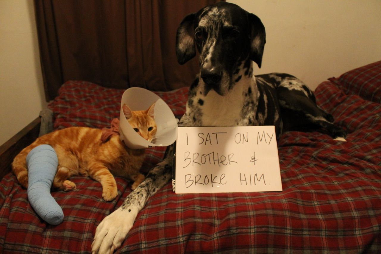 dogshame:  i sat on my brother and broke him