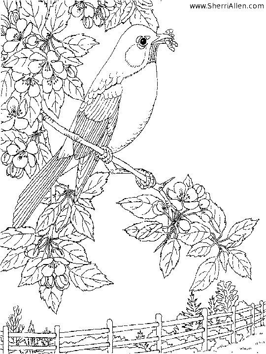 Pin Von Kim King Hall Auf Drawing Vogel Malvorlagen Kostenlose Erwachsenen Malvorlagen Ausmalbilder