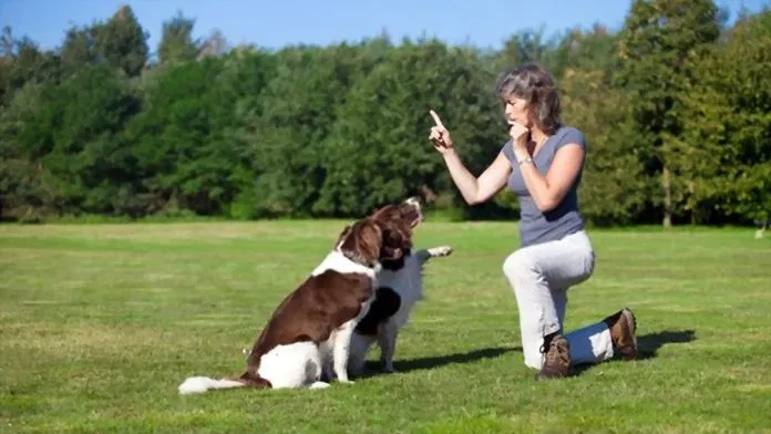 Woman training her dogs with a whistle. Training your