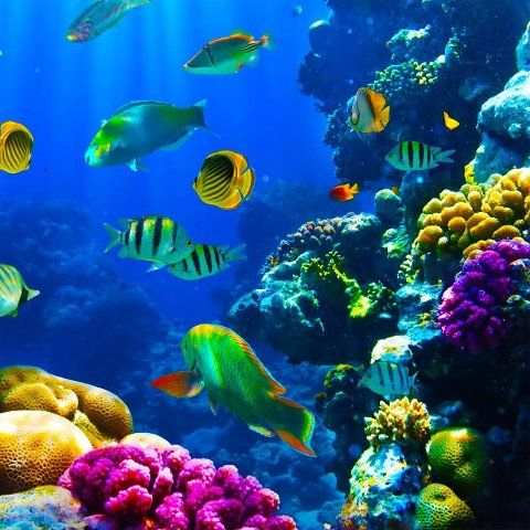 Beautiful Deep Sea Photo Tropical Fish Ocean Creatures Coral Reef