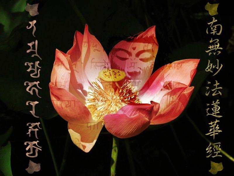 Lotus Sutra Om Namah Shivaya Pinterest Buddhism Buddha And