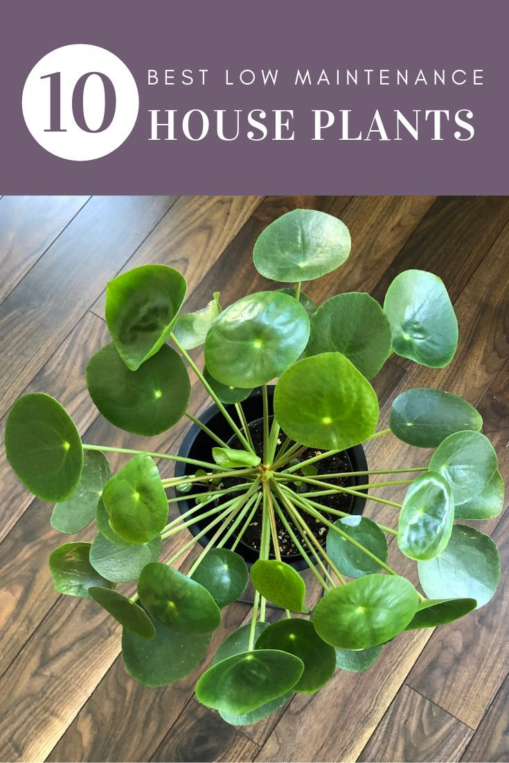 10 Best Low Maintenance Indoor Plants - My Tasteful Space