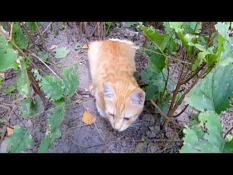 Found a Homeless Ginger Kitten in the Bushes - YouTube #gingerkitten Found a Homeless Ginger Kitten in the Bushes - YouTube #gingerkitten Found a Homeless Ginger Kitten in the Bushes - YouTube #gingerkitten Found a Homeless Ginger Kitten in the Bushes - YouTube #gingerkitten Found a Homeless Ginger Kitten in the Bushes - YouTube #gingerkitten Found a Homeless Ginger Kitten in the Bushes - YouTube #gingerkitten Found a Homeless Ginger Kitten in the Bushes - YouTube #gingerkitten Found a Homeless #gingerkitten